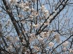 花いっぱいの枝