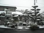 雪の朝(2010年1月13日)